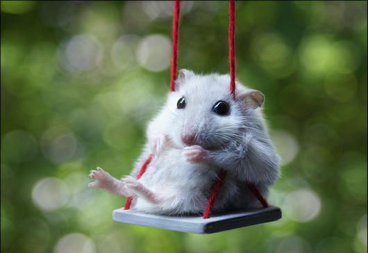 чиж мышка аккорды