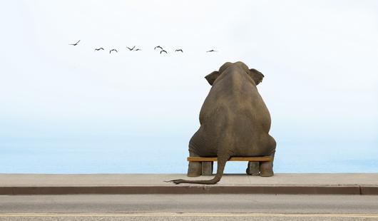 чиж про слонов аккорды