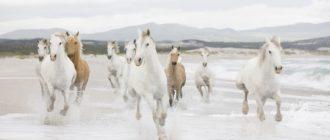 кузьмин кони аккорды